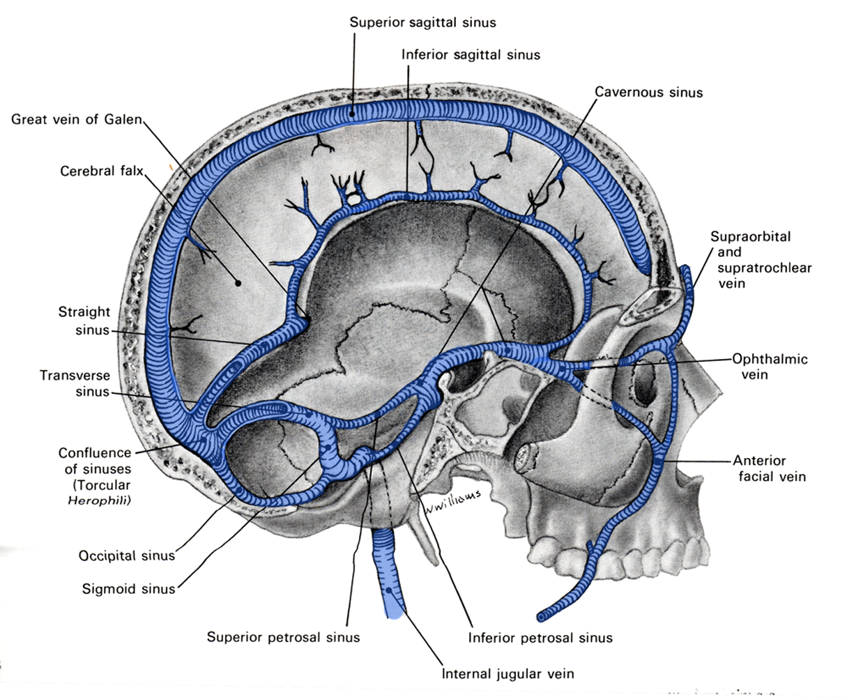 Dural sinus anatomy